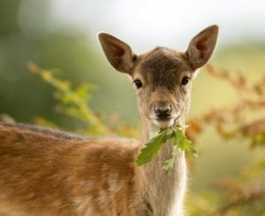 wacky wednesday; crazy lawsuits; weird laws; stupid lawsuits; peta kills deer; suing government