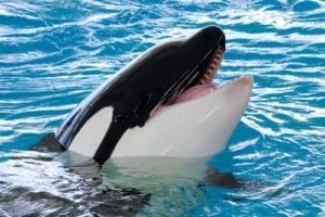 wacky Wednesday; weird laws; crazy court cases; funny legal stories; weird lawsuits, crazy litigation; seaworl lawsuit; whale kills lawsuit
