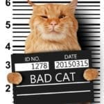 wacky wednesday; crazy court case; weird criminal case; wacky crime story