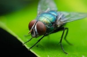 fly in water; fly lawsuit; legal fly