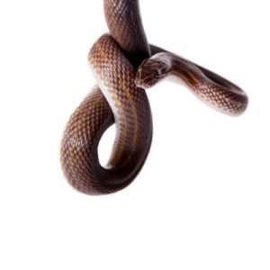 Wacky Seller Of Snake Infested House Sued For Non-Disclosure Of Pest Problem
