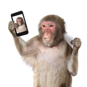 copyright law; seflie monkey; crazy legal battle; PETA; animal rights