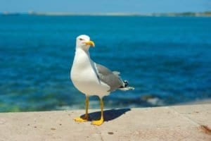 seagull, ocean, sea, bird