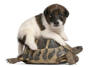 puppy, sick, feed, turtle, teacher, classroom, students, dog, puppy riding turtle