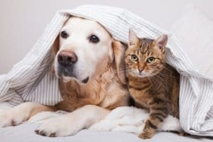Pets During Separation And Divorce Division Of Assets
