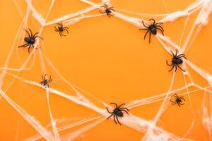 Halloween, spider, phobia, wacky Wednesday